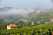 Italien, Piemont, Weinlandschaft, Morgennebel bei Priocca