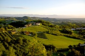 View of vineyard in Monforte d'Alba in Piedmont, Italy
