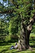 Bremen: Bürgerpark, Mann sitzt am Baum, sommerlich, idyllisch