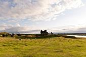 Irland: County Offaly, Clonmacnoise, Mönchensiedlung, Weide grün