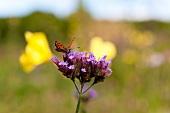 Butterfly on small purple flowers