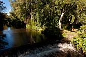 Irland: Ashford, Mount Usher Garden, Gewässer, Bäume, sommerlich.