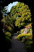 View of trees and dirt path through Mount Usher Garden in Ashford, Ireland