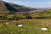 Irland: Beara-Halbinsel, Natur, Hügellandschaft, malerisch