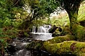 Irland: Ring of Kerry, Wasserfall, Natur grün, Idylle.