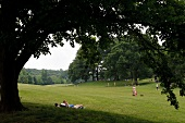 People relaxing and enjoying in park at New York, USA
