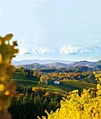 View of Kranachberg vineyards from Weingut Sattlerhof Gamlitz, Austria