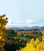 Die Weinlage Kranachberg, gesehen vom Weingut Sattlerhof bei Gamlitz