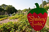 View of Strawberry Fields with signboard in New York Botanical Garden, New York, USA