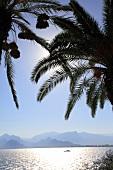 Antalya: Blick auf Golf von Antalya, Berglandschaft, Palmen.