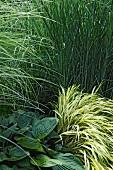 Ostseeküste: Garten, Pflanzen grün