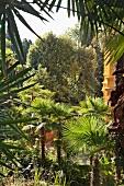 Kroatien: Villengarten Opatija, Palmen, grün