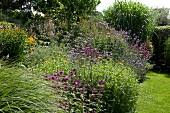 Various shrubs, perennials, flowers and grasses in garden