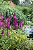 Shrubs with violet flowers in garden