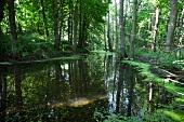 Ostseeküste: Schleswig-Holstein, Lindau, Wald, Wasser, idyllisch.