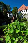 Woman at herb garden, Augsburg, Swabia, Bavaria, Germany