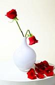 rote Rosen, weiße Vase, geknickt, abgeknickt, Rose, Rosenblätter