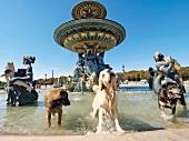 Dogs in Fontaine des Mers at Place de la Concorde, Paris, France