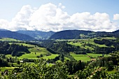View of mountain and green pastures at Oberallgaeu, Bavaria, Germany