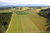 Green field in Sollhuben, Riedering, Bavaria, Germany, Aerial view