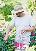 Sven Jacobsen in a garden collecting rose petals