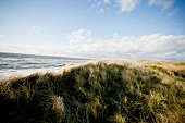 Dunes on west beach, Sylt, Germany