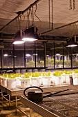 Production hall of ecological farming university, Witzenhausen, Hesse, Germany