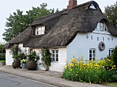 Old house with thatched roof and yellow flowers on side