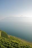 Genfer See, Kanton Waadt, Waadtländer Alpen, Weinberge Lavaux