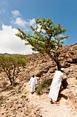 Men in valley with Weihrauchbaeume in Salalah, Dhofar, Oman