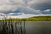 View of lake with reeds and rainbow at morning, Bradenbug, Germany