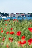 View of Novigrad and poppy field, Istria, Croatia