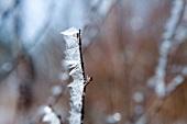 Lappland, Landschaft, Gräser, gefror en, vereist