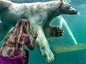 Hannover, Erlebnis-Zoo Hannover, Yukon Bay, Eisbär