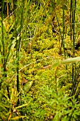 Close-up of stems, moss and fern at Bruchsee, Germany