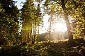 Forest near Grossalmerode, Witzenhausen, Kassel, Hessen, Germany