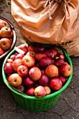 Red apple basket bags at Hessen-Kassel