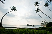 Sri Lanka, Südküste, Koggala, Strand, Palmen, malerisch