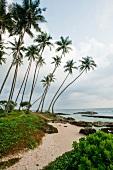 View of palm trees and rocks on beach at Koggala, Sri Lanka