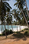 View of Tangalle beach and palm trees from Jetwing Hotel, Sri Lanka