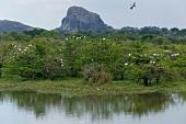 View of stocks on trees at Yala National Park in Sri Lanka