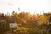 Berlin, Tempelhofer Feld, Garten, Abendsonne, Berliner