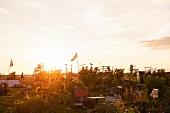 Berlin, Tempelhofer Feld, Garten, Abendsonne, Blumenbeete