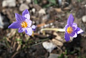 Close-up of purple flower in Dilek Peninsula National Park, Kusadasi, Turkey