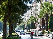 Busy street with palm tree on both side of road in Aydin, Turkey