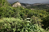 View of mountains and wilderness in Spil Dagi National Park in Aegean, Turkey