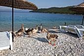 View of pebbles and geese on beach in Akbuk, Aegean, Turkey
