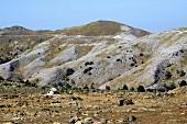 Türkei, Türkische Ägäis, Edremit, Kazdagi Milli Parki, Nationalpark