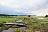Marshland in Highlands National Park of Canada at Cape Breton Island, Canada