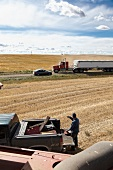 View of trucks on cornfield for agriculture, Saskatchewan, Canada
